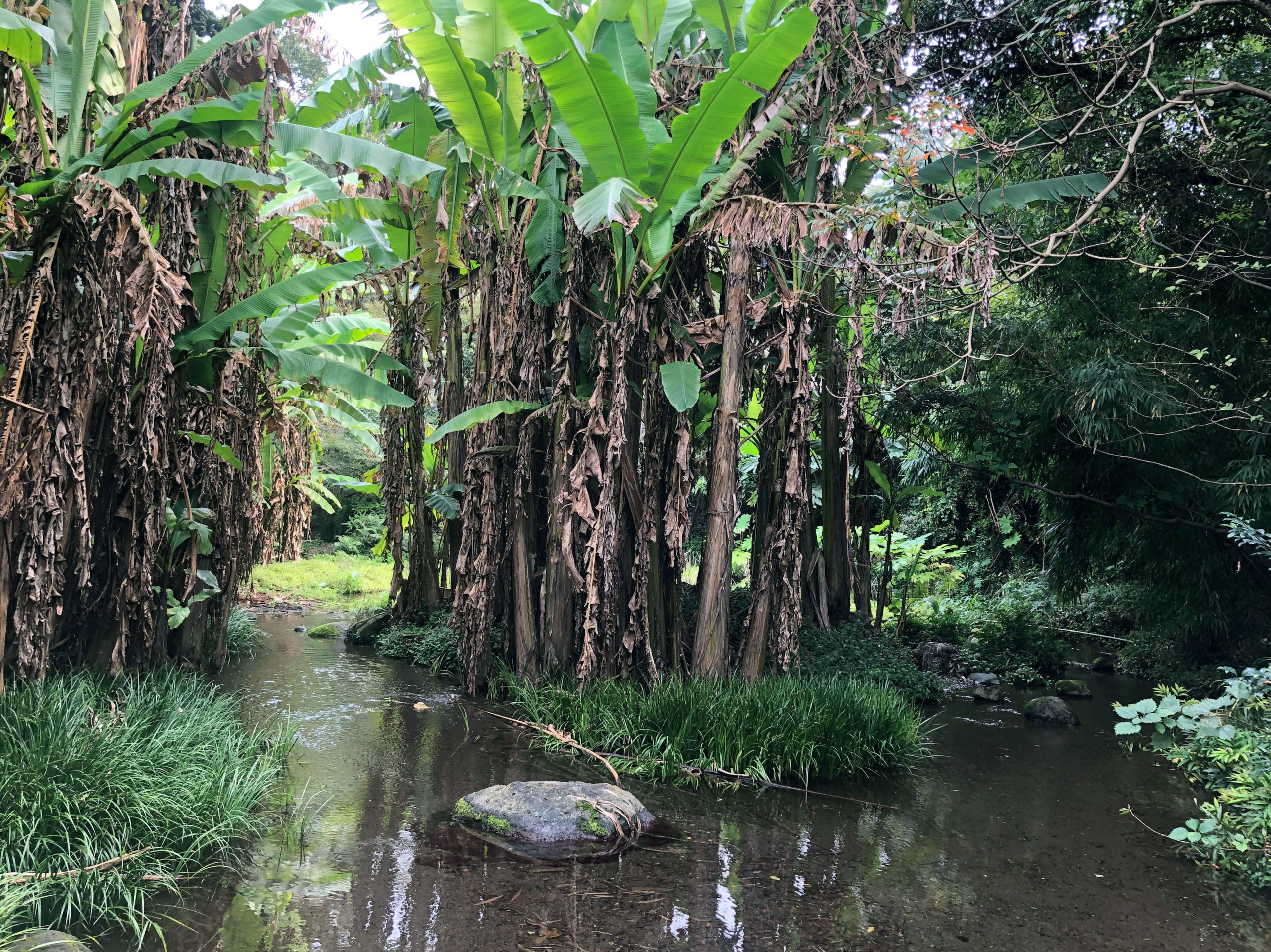 ジャングルのような景色が広がる熊本の公園