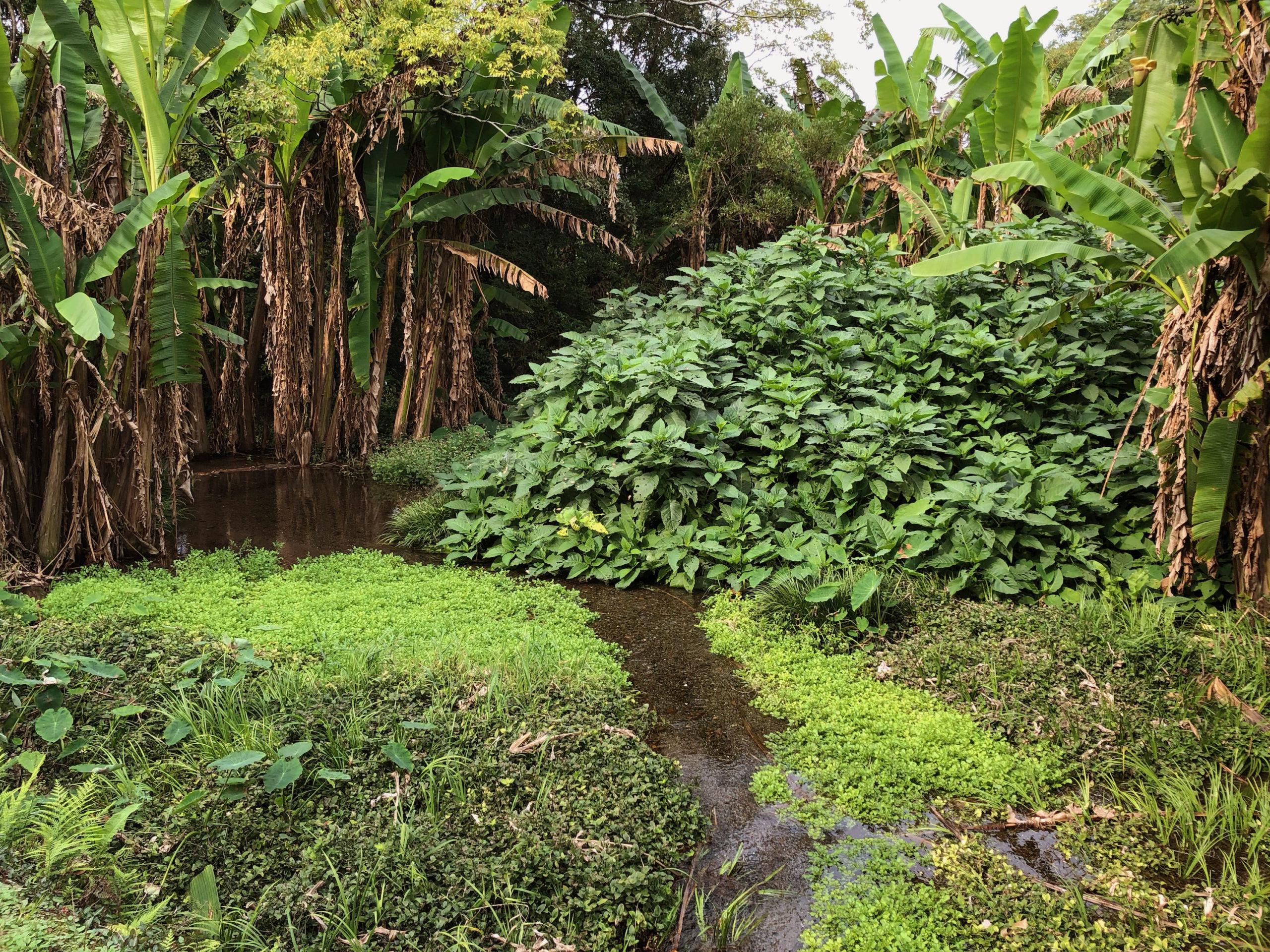 ジャングルのような景色が広がる熊本の公園には川が流れている
