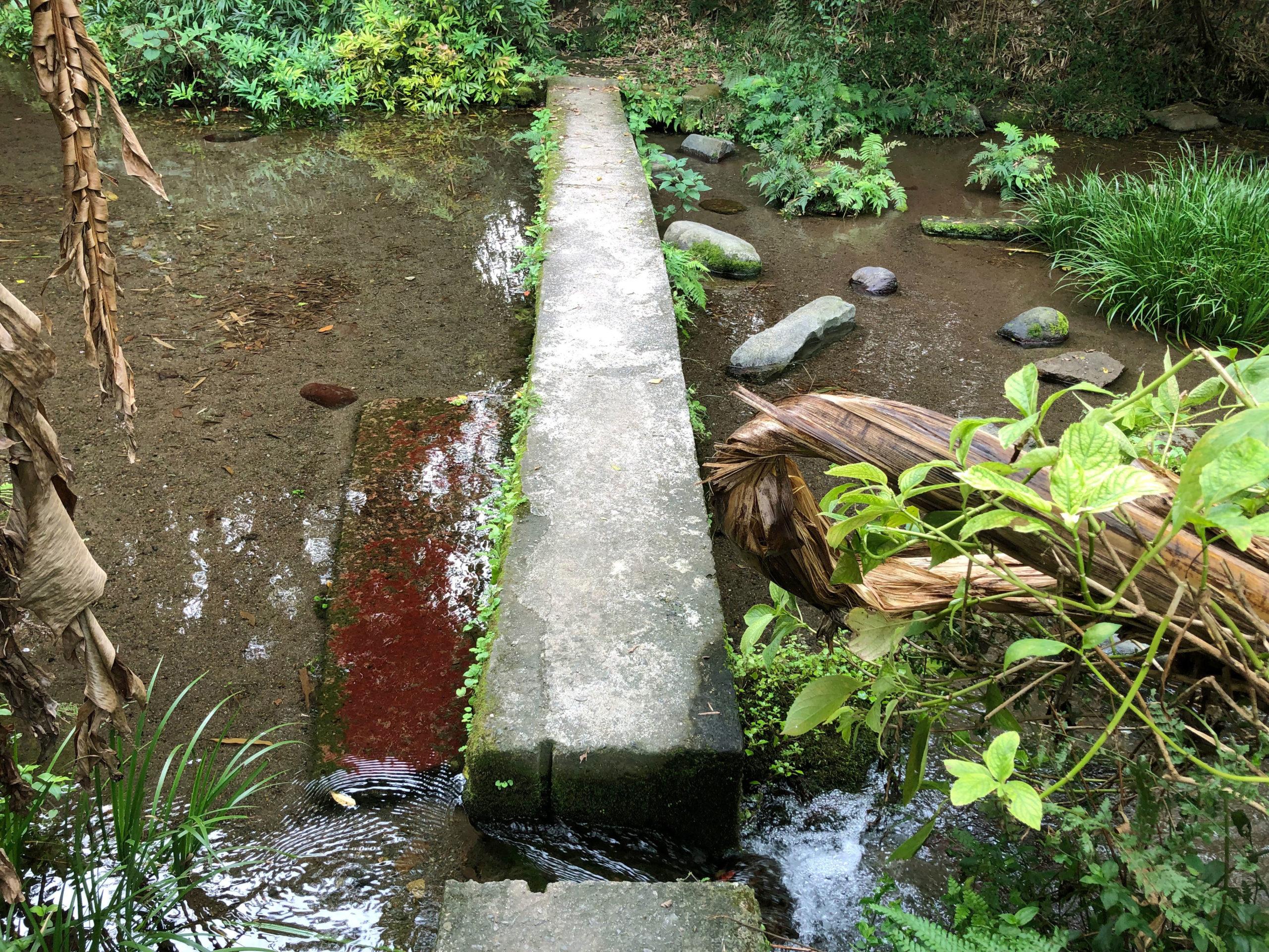 熊本市江津湖の不思議なスポットは小川を渡る歩道もある