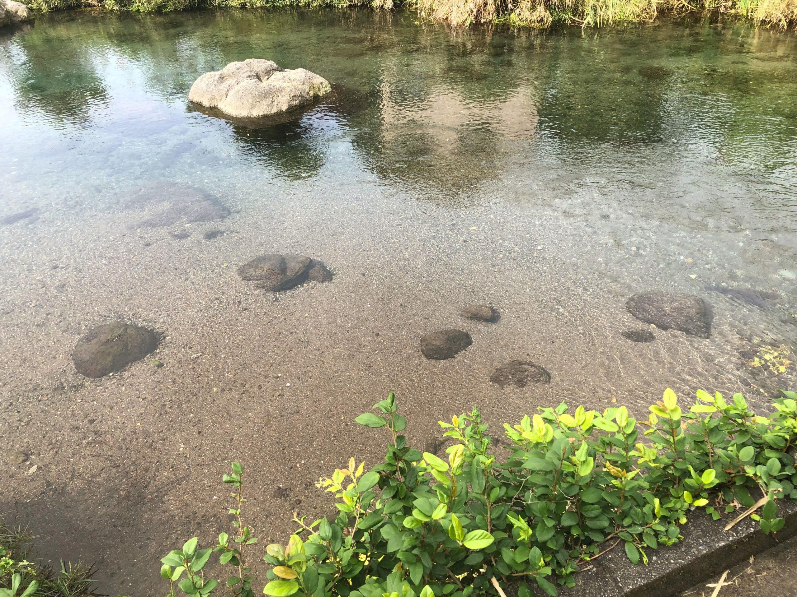 熊本市江津湖の美しい湧水が流れる場所