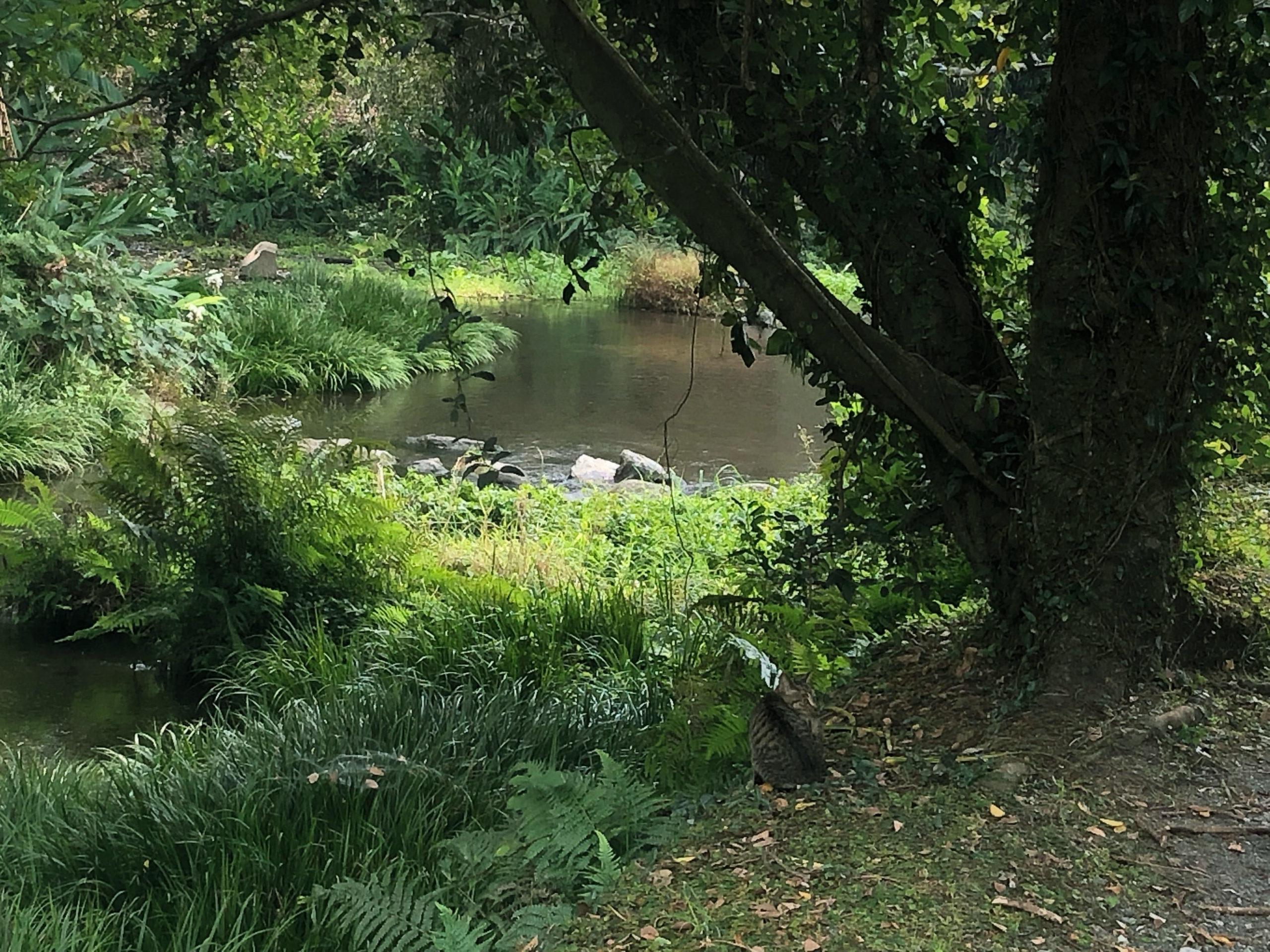 うっそうとした熊本市江津湖のジャングルのような場所はお散歩にもってこい!