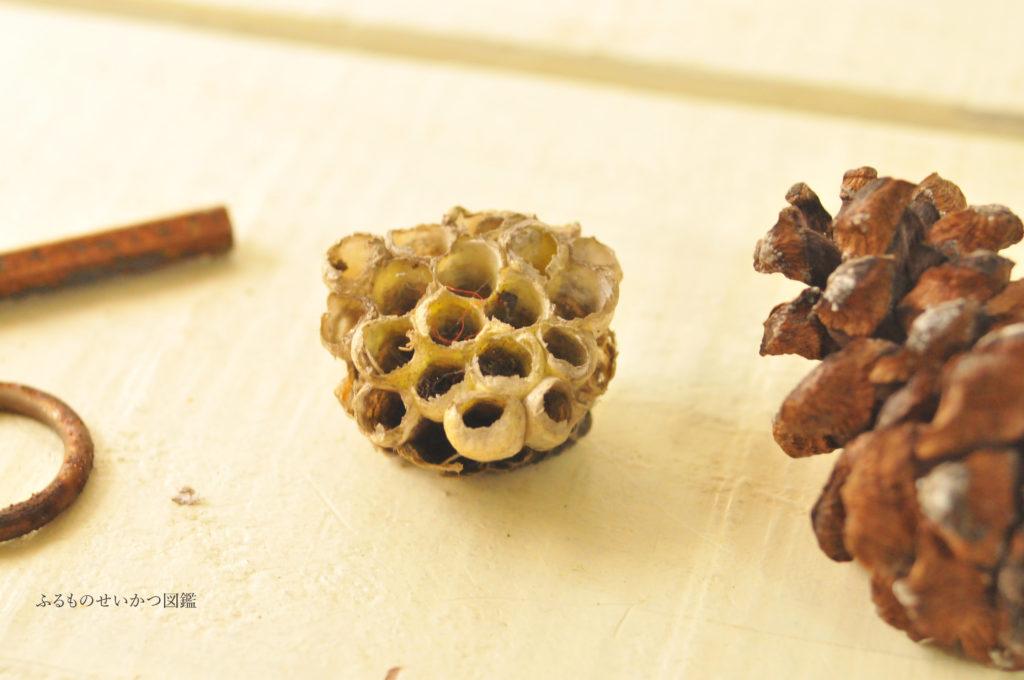 山に落ちていた蜂の巣は可愛らしいシャビーシックなお土産に