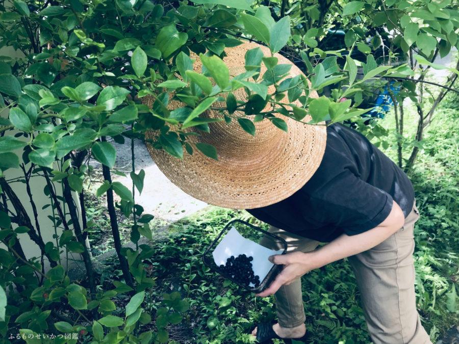 【田舎暮らし始めました!】ブルーベリーのなる庭で