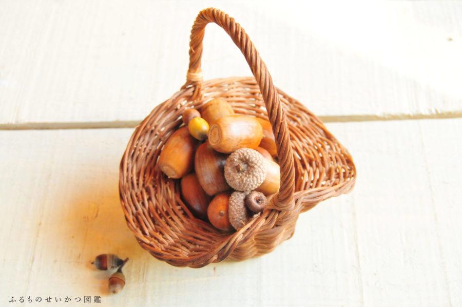 木の実を収集、特別大きなドングリ!