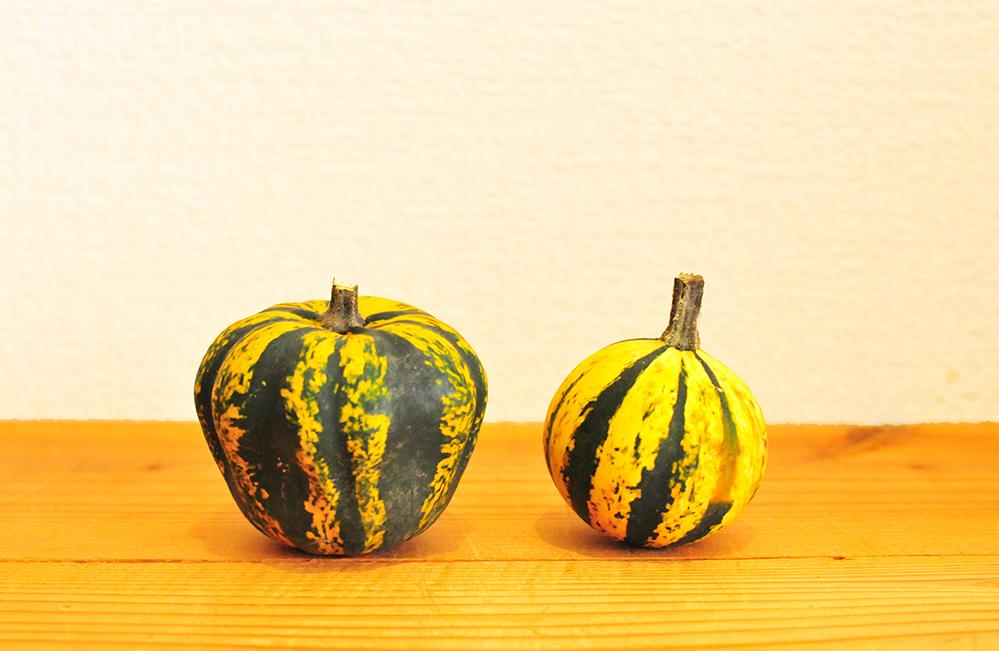 黄色と緑の縞模様の小さい飾り付け用カボチャ2つ