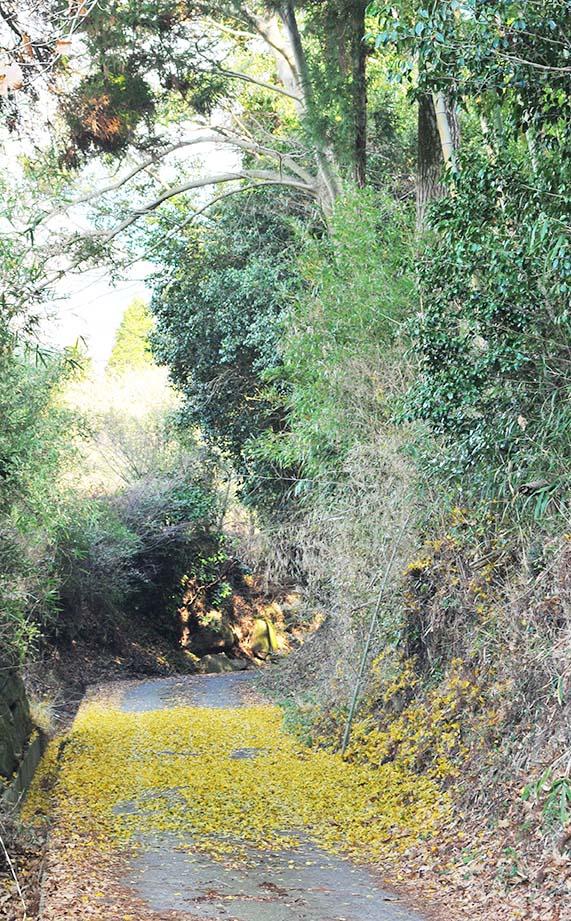 イチョウの葉っぱの絨毯が綺麗な雑木林に続く小道