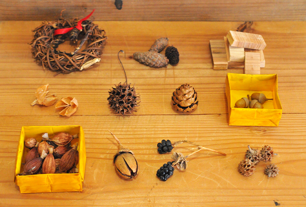 集めた木の実は色んな種類があって形も違っておもしろい