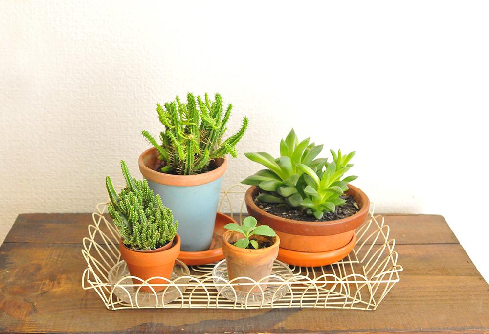 植物を4つのせておさまりのいい50円カゴ