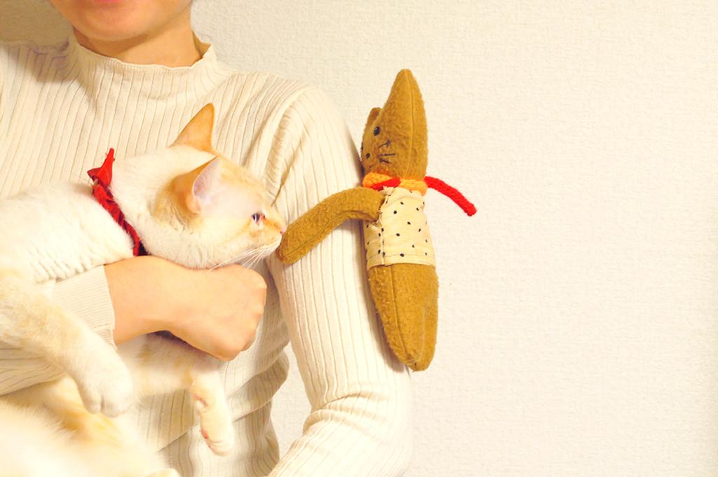 腕に抱きついた抱っこぬいぐるみに興味深々な猫