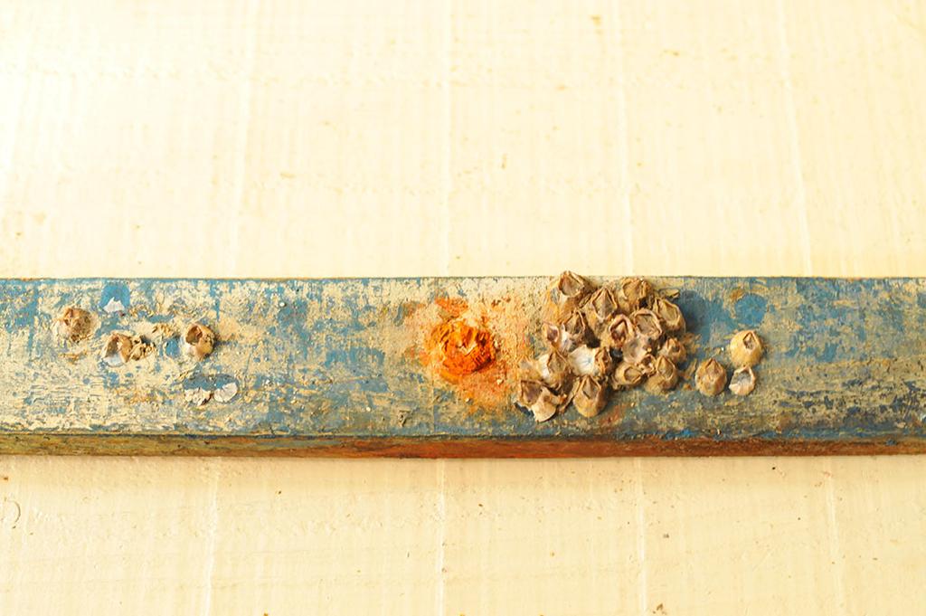 海で拾った色つき流木、流板には生き物の痕跡もあって雰囲気がある-ふるものせいかつ図鑑