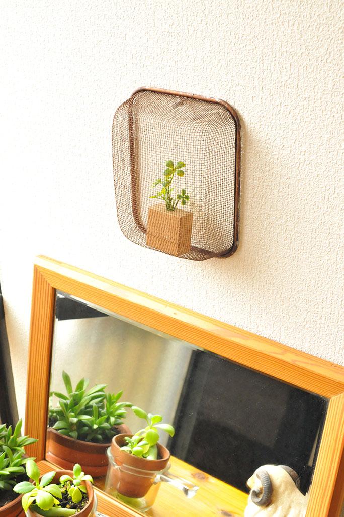 調理器具を使ったインテリア。植物をいれて壁掛けに-ふるものせいかつ図鑑